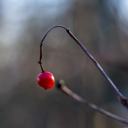 Punainen marja